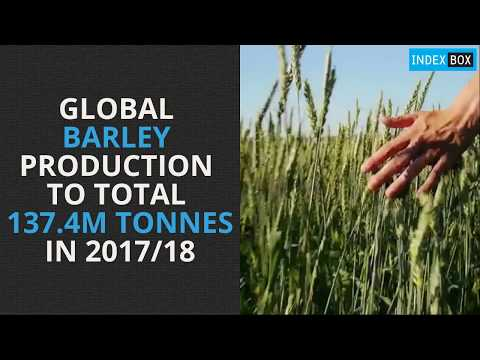 Global Barley Production to Total 137.4M Tonnes in 2017/18
