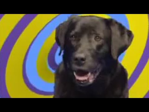 Quit smoking dog - This Is Dom Joly - BBC comedy