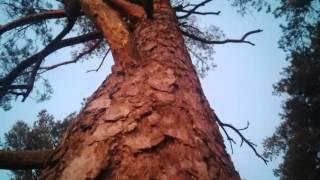 Video Bratři - Z lesů