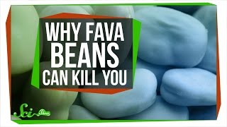 Why Fava Beans Can Kill You by  SciShow