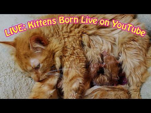 Kittens Live Birthd