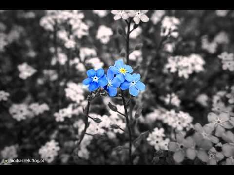 Tekst piosenki Andrzej Dąbrowski - Zapomnij mnie po polsku