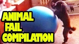 Funny Animals Videos - Animal Fail Compilation 2012