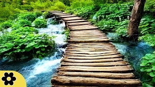 6 Hour Zen Music for Wellbeing: Nature Sounds, Inner Peace, Meditation Music, Relaxing Music, ✿2587C – Our Reiki Music and Zen Music is ideal for Reiki heali...
