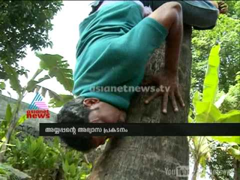 down - Interesting video of man climbing tree upside down Subscribe to Asianet News HERE http://goo.gl/Y4yRZG Check out our website: http://www.asianetnews.tv Facebook: https://www.facebook.com/AsianetNew...