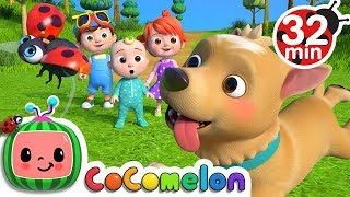 Video Where Has My Little Dog Gone? | +More Nursery Rhymes & Kids Songs - CoCoMelon MP3, 3GP, MP4, WEBM, AVI, FLV Mei 2019