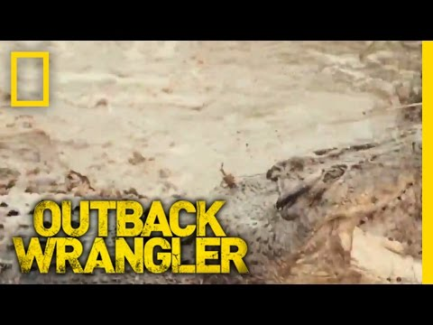 Lying Low in a Water Hole   Outback Wrangler