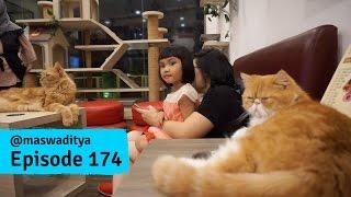 Video Bertamu di Cat Cafe! MP3, 3GP, MP4, WEBM, AVI, FLV Januari 2019