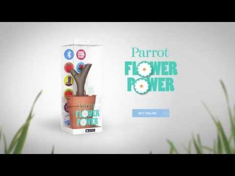 Video of Parrot Flower Power