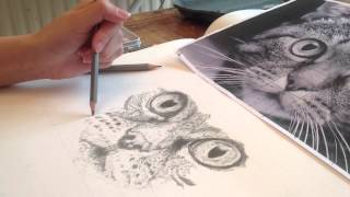 Cat time lapse drawing