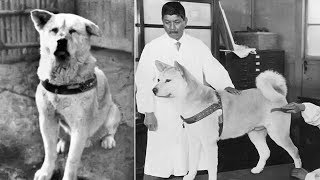 Nonton Hachiko - A True Story Of A Dog's Love For His Master [Hindi] Film Subtitle Indonesia Streaming Movie Download