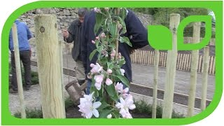 Ippenburger Gartentipps: Pfähle-Einschlagen kommt vor dem Bäume-Pflanzen