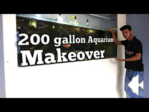 200 gallon Aquarium makeover is done_Akvárium