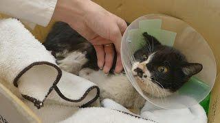 Poki the cat's vet results!