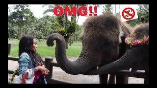 THE ELEPHANT SLAPPED ME!! | AALIYAHJAY by Ms Aaliyah Jay
