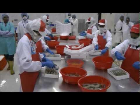 The shrimp farmers of Bangladesh