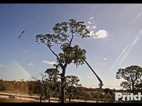 SWFL Eagles ~ CROW Arrives To Nest With Bucket Truck ~ Retrieves E14's Body! 1.15.20