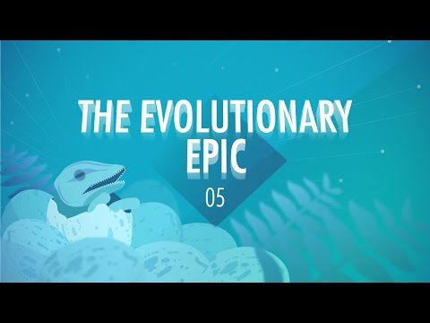 5 - In which John Green, Hank Green, and Emily Graslie teach you about evolution. So, in the last 3.8 billion years, life on Earth has evolved from single-celled prokaryotes to the dizzying array...
