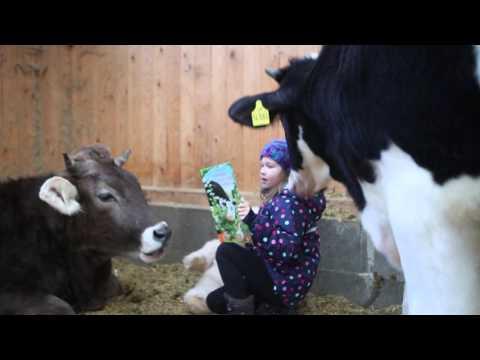 bambina-cerca-di-leggere-una-favola-alle-mucche