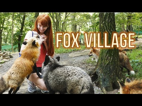 Fox Village in Zao Japan! – Viral Video
