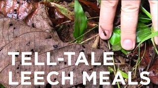 Tell-Tale Leech Meals