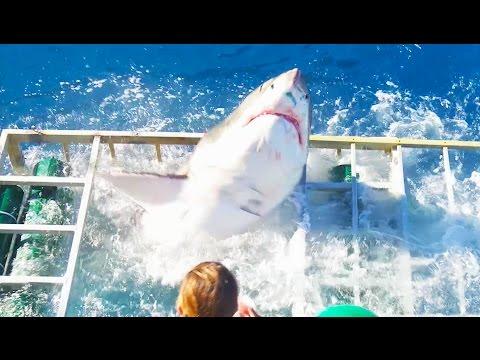 Investigan incidente con tiburón en BC