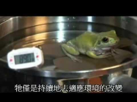 水煮青蛙實驗 (慎入!!!)