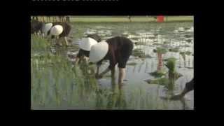 Lễ Hạ Điền Vùng Lúa Nước Yên Hưng - Kênh TV Du Lịch Văn Hóa Lễ Hội Truyền Thống VN
