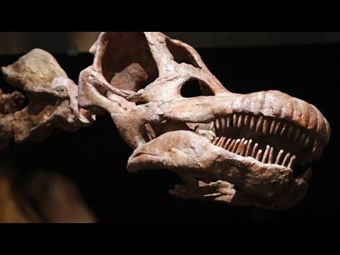 Video: Meet the world's largest dinosaur
