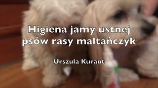 Higiena jamy ustnej psów rasy maltańczyk