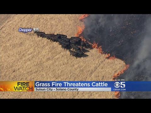 Crews Battle Vegetation Fire In Suisun City