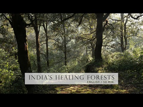 Nature Documentary - Healing Forests of India |  English, HD | Chapter shortcuts in description