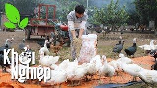 Chuyên gia chỉ cách cho nhà nông làm giàu với 300 triệu - Khởi nghiệp 408
