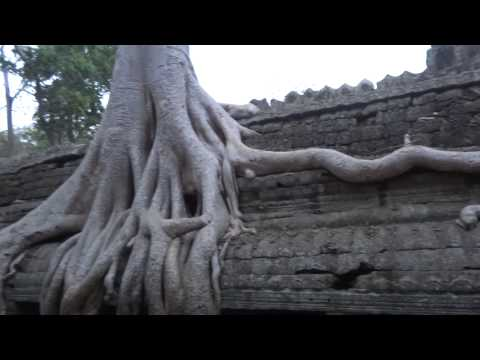 Dawn at Ta Prohm temple in Angkor. By TVS (8,3)
