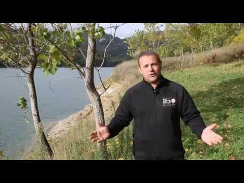 Imperial Baits Zipper - product review