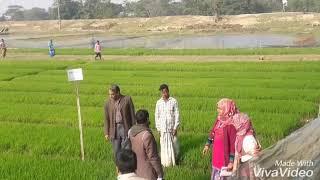 আদর্শ বোরো বীজতলা নেত্রকোনা সদর