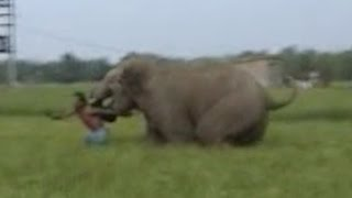 Inde : l'éléphant charge un habitant à 2 reprises