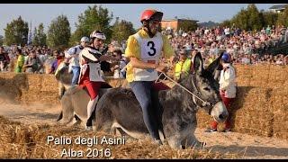 Nonton Palio degli Asini Alba 2016, Donkey Palio of Alba, Italy, Donkey race. Film Subtitle Indonesia Streaming Movie Download
