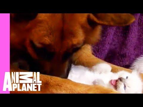 Søte kattunger og en hund :)