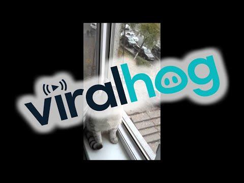 pare che questo gatto abbia avuto una visione celestiale