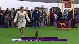 Best of Variety Westminster Kennel Club 2017
