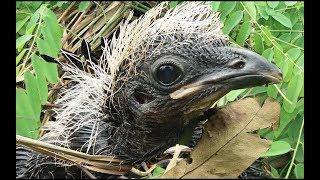 Phát Hiện Tổ Chim Bìm Bịp Trong Khu