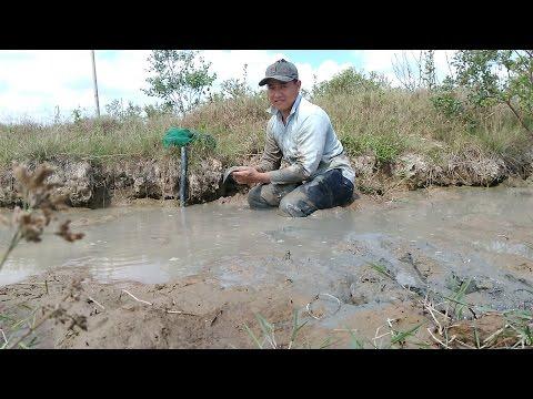 Đi đào hang thụt Bắt Cá Lóc Đồng dưới đường kênh vào mùa khô như vậy mới đã - Thời lượng: 21:30.