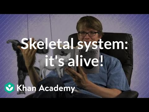 The Skeletal System It S ALIVE Video Khan Academy