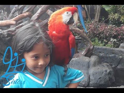 Di Batu Secret Zoo || Part 2