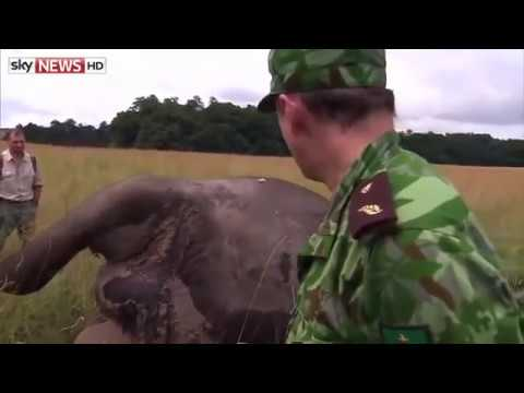 ELEPHANT head cut off by poachers - Shocking footage of elephant man conflict in this attack.