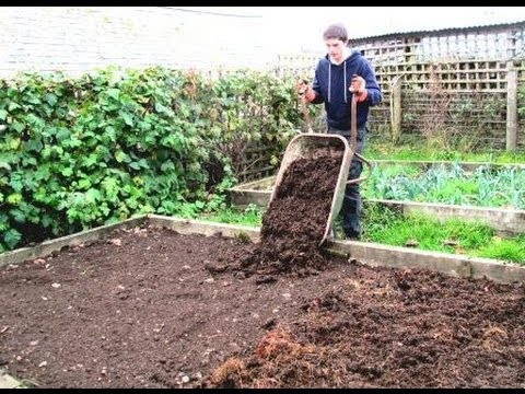 VEGETABLES - Today you will learn how you can improve your soil in the Autumn for growing nutritious vegetables in Spring. Watch the whole video to get every bit of detai...
