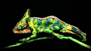 Download Video Chameleon - Impressive Creation - Fine Art Bodypainting By Johannes Stötter