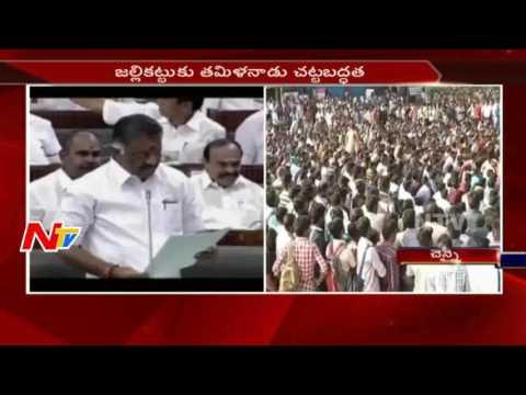 Jallikattu Law to Pass in Tamil Nadu Assembly