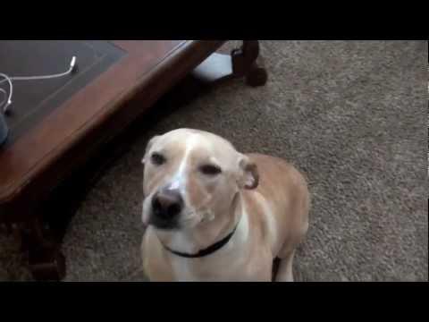 Un cane che  ama volare